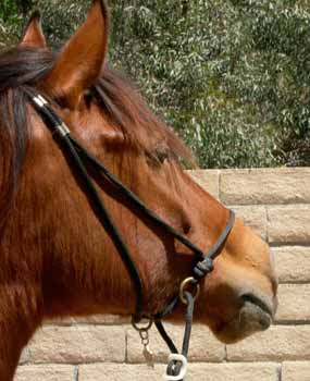 Horse tack id identification tags