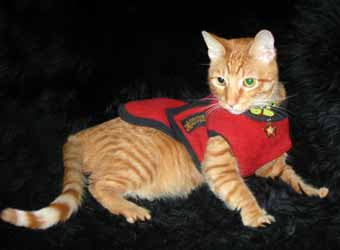warm fleece pet cat coats
