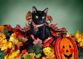 black cat Halloween Holiday cards