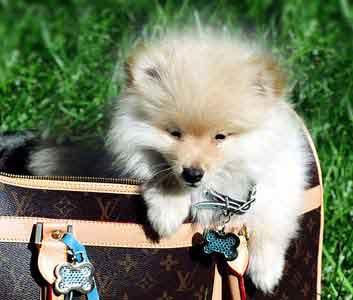 BUBBLE Genuine Crystal Rhinestone Heart Cat Dog Pet Collar Tag Free Engraving!