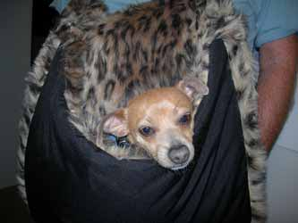 faux fur dog carriers