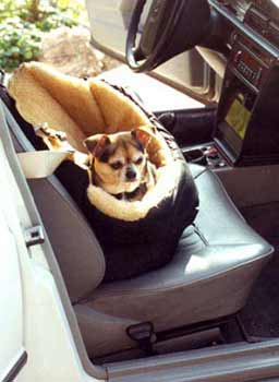 dog  car seatss