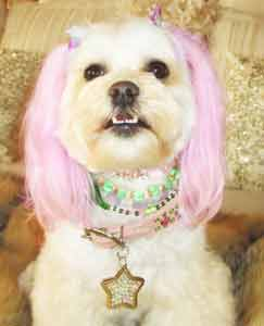 princess beverly hills animalstars tags