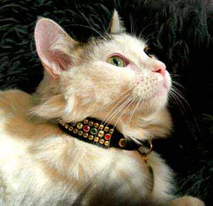 Animalstars Regent Stud Crystal Collars Custom Dog Cat
