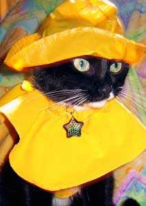 Texas Harley Davidson >> ANIMALSTARS.COM: pet dog cat photos, photography, animal ...