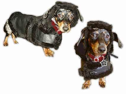 Animalstars Military Style Dog Clothes Coats Hats