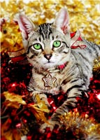 glamour cat kitten holiday christmas greeting cards